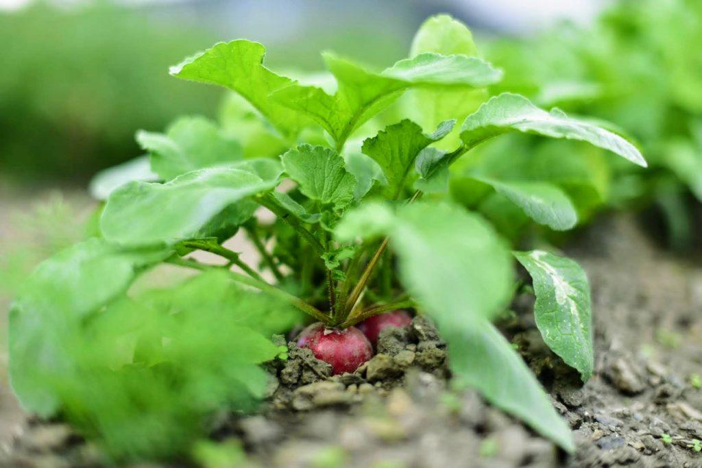 Jesienne chwile w warzywniku
