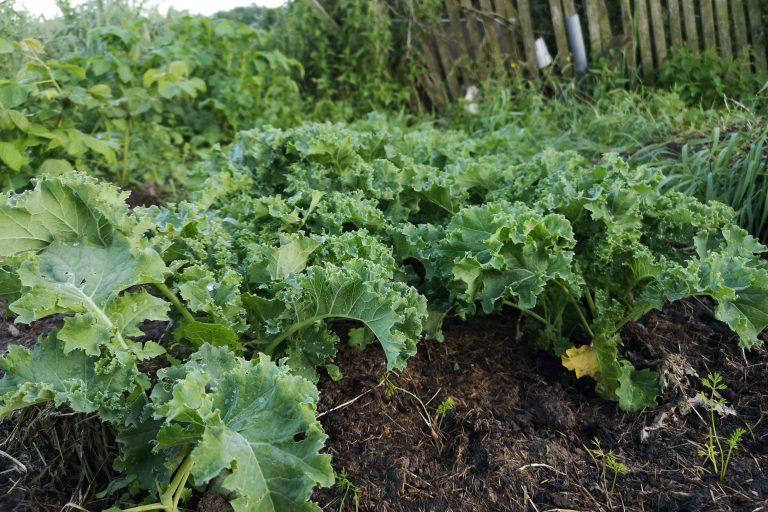 Ostre papryki na sosy rosną, a co z resztą warzyw?